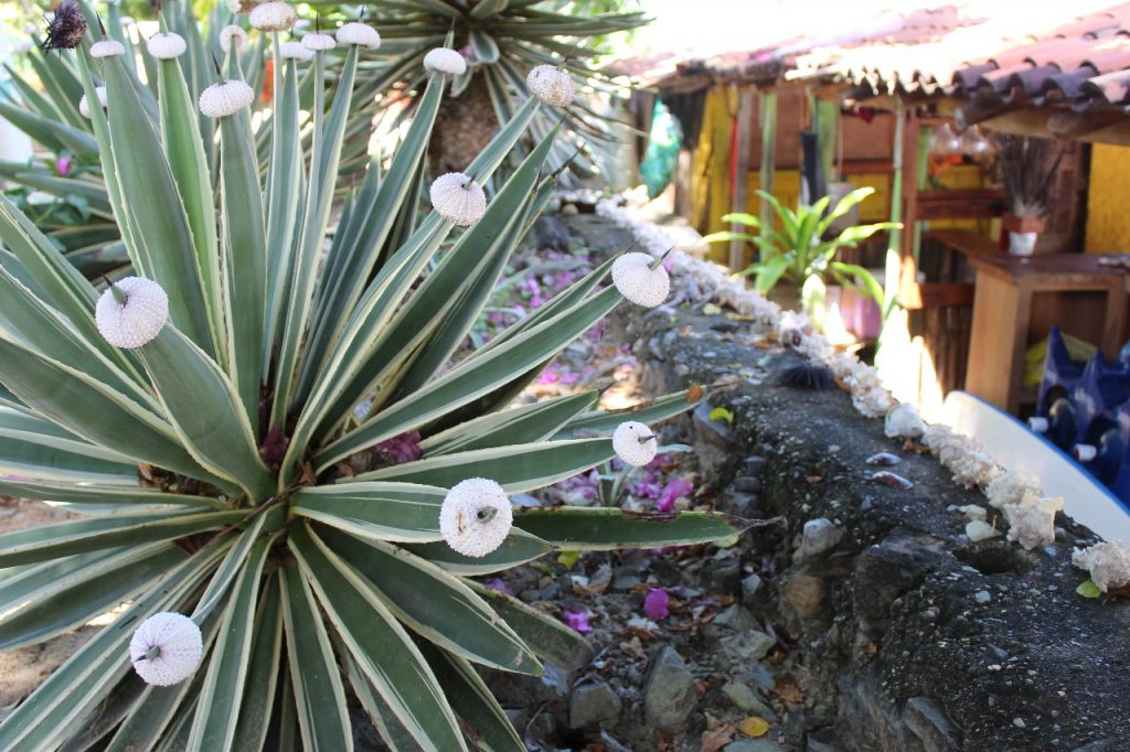 discover troncones saladita majahua mexico playa reservaciones hospedaje ixtapa guerrero travel near me booking hotel cheap hotel majahua plant