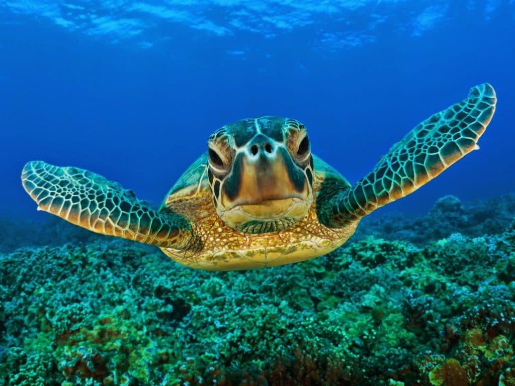discover troncones saladita majahua mexico playa reservaciones hospedaje ixtapa guerrero travel near me booking hotel cheap hotel liberacion de tortugas turtle release Tortuga carey Hawksbill turtle